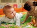 Младенцы и собачки: Самые забавные моменты