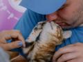 Фестиваль котиков: сколько хвостатых обрели свой дом