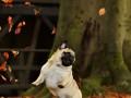 Улыбнись: ТОП-50 фото домашних любимцев в опавших листьях
