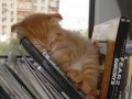 Где упал, там и сплю: смешные фото спящих котов