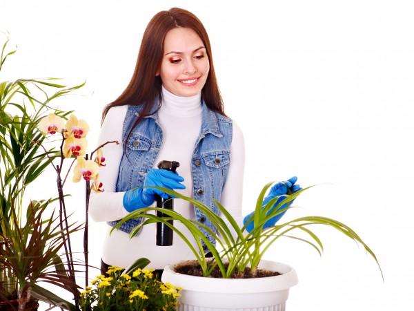 комнатные цветущие растения названия с фото