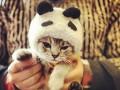 Фотоподборка милых животных из Instagram: ТОП-50