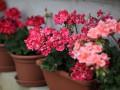 Какие комнатные растения очищают воздух?