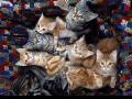 Американка переехала в трейлер, уступив дом котам