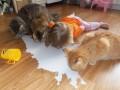 Дети, которые думают, что они – животные (фото)