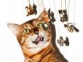 В новогодней рекламе украшений сняли котов