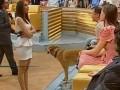 Власова в эфире заявила, что Ляшко целовал кого-то в зад