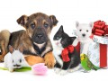 Лучшее домашнее животное для квартиры: Кого выбрать?