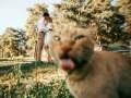 Осторожно, коты в кадре: как питомцы могут испортить фото