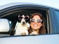 Как подготовить собаку к путешествию