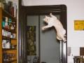 Летящий ужас с лапами: фото котов в прыжке