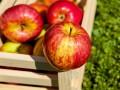 Яблочный Спас: традиции и история праздника