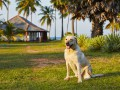 Какая собака подойдет для загородного дома