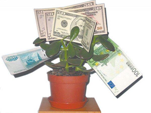 Какое растение принесет в дом достаток - Комнатные ...