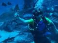 Александр Скичко поплавал с акулами
