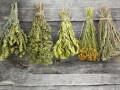 Какие травы устранят диарею