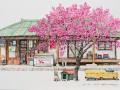 Колорит Южной Кореи в эскизах азиатской художницы