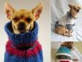 Пушистые модели: Фото домашних любимцев в уютных свитерах