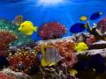 Каких аквариумных рыбок можно содержать вместе