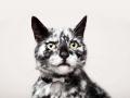19-летний кот стал звездой интернета благодаря интересному окрасу