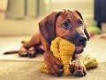 Лучший друг человека: 21 невероятный снимок собак
