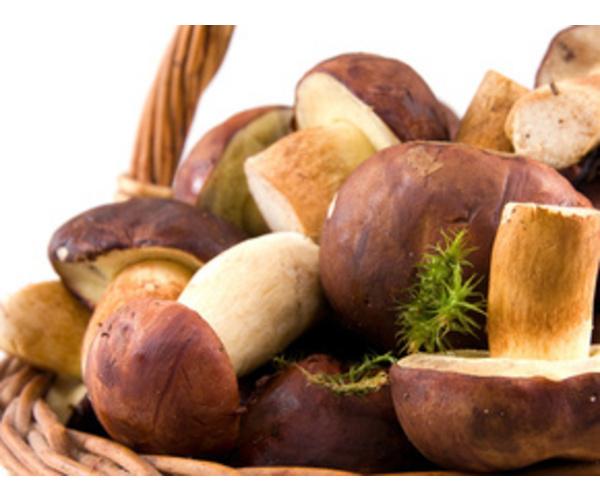 Можно ли есть грибы детям?