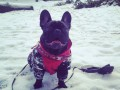 Замело: ТОП-25 фото животных, резвящихся в снегу