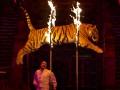 Украинцев призывают отказаться от цирков с животными
