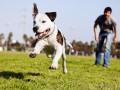 Как воспитывать собаку, если она не слушается