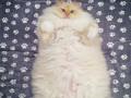 Instagram-герой дня: самый пушистый кот в мире