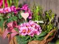 Как выбрать подходящее растение и где его разместить