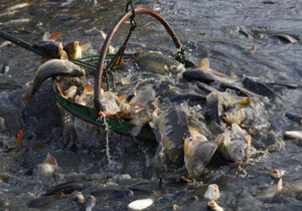 паразиты от речной рыбы у человека