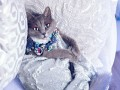 Fashion is my profession: гламурная кошка стала звездой Instagram