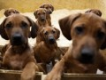 Ветеринарам разрешили использовать наркотические средства