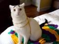 Всемирный день котов: три необычных аккаунта в Instagram