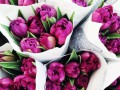 Поздравления на 8 марта в стихах