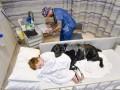 Безграничная преданность собаки помогает мальчику жить