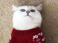 Instagram-герой дня: кот с самыми красивыми глазами