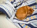 Зачем заправлять кровать: Советы фэн-шуй