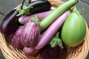 Баклажаны бывают не только синими, но и светло-фиолетовыми и даже зелеными