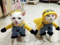 Кот тоже будет праздновать Хэллоуин: костюмы для хвостатых
