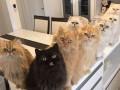 Кумир сильных и независимых: владелица 12 кошек покорила Instagram