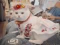 В Киеве прошел благотворительный Фестиваль котиков: Фото питомцев