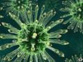 Ученые выяснили, как организм образовывает антитела против вируса ВИЧ