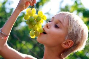 Виноград поможет школьнику сосредоточиться