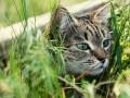 Почему коты любят валерианку?