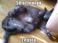 50 оттенков серого: Смотри ТОП-10 интернет-мемов на фильм