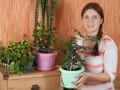 Украшаем дом комнатными растениями. Часть 1