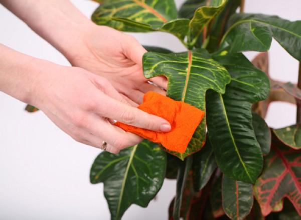 Смотреть Комнатные растения: как правильно подготовить их к зиме видео
