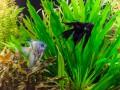 Как ухаживать за рыбками